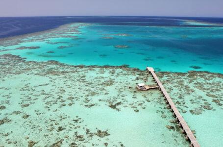 سنقنيب(جزيرة الشعب المرجانية)